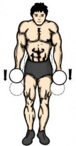 упражнение шраги