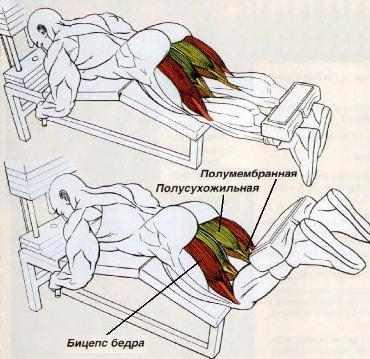 Упражнения для двуглавой мышцы бедра домашних условиях