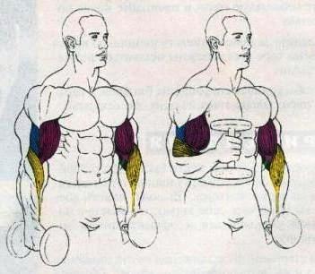 упражнение на бицепс молот 3